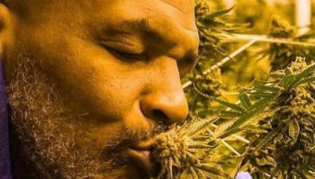Mike Tyson, marijuana, pot, weed, green, smoke, cannabis