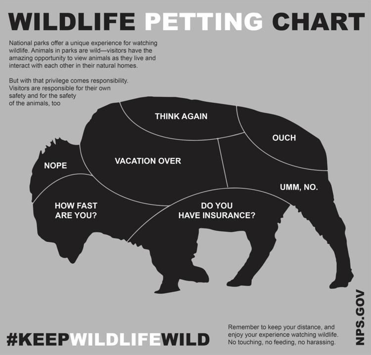 nps, bison, petting guide,