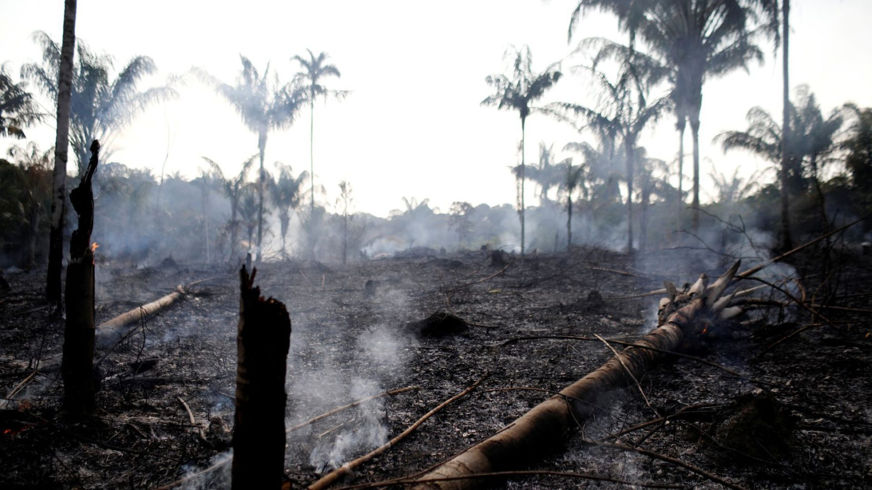 Help the Amazon
