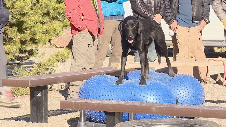 avalanche, dogs, training, summit county, colorado