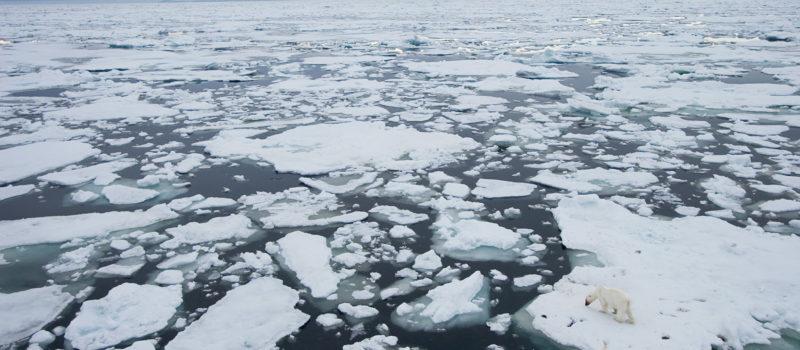 A polar bear on melting sea ice.