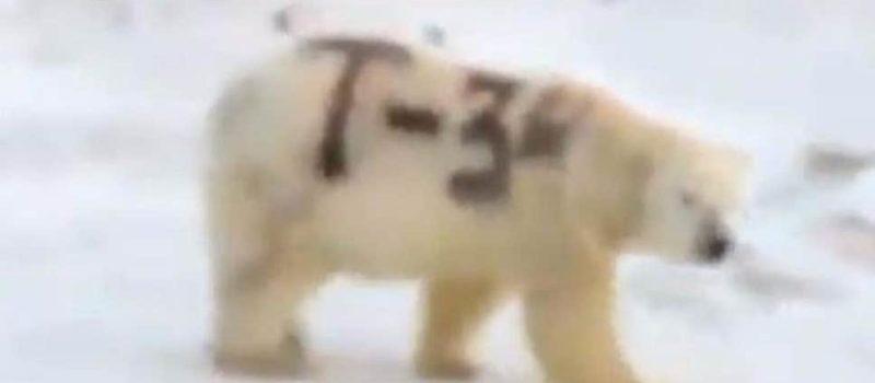 t-34, russia, polar bear
