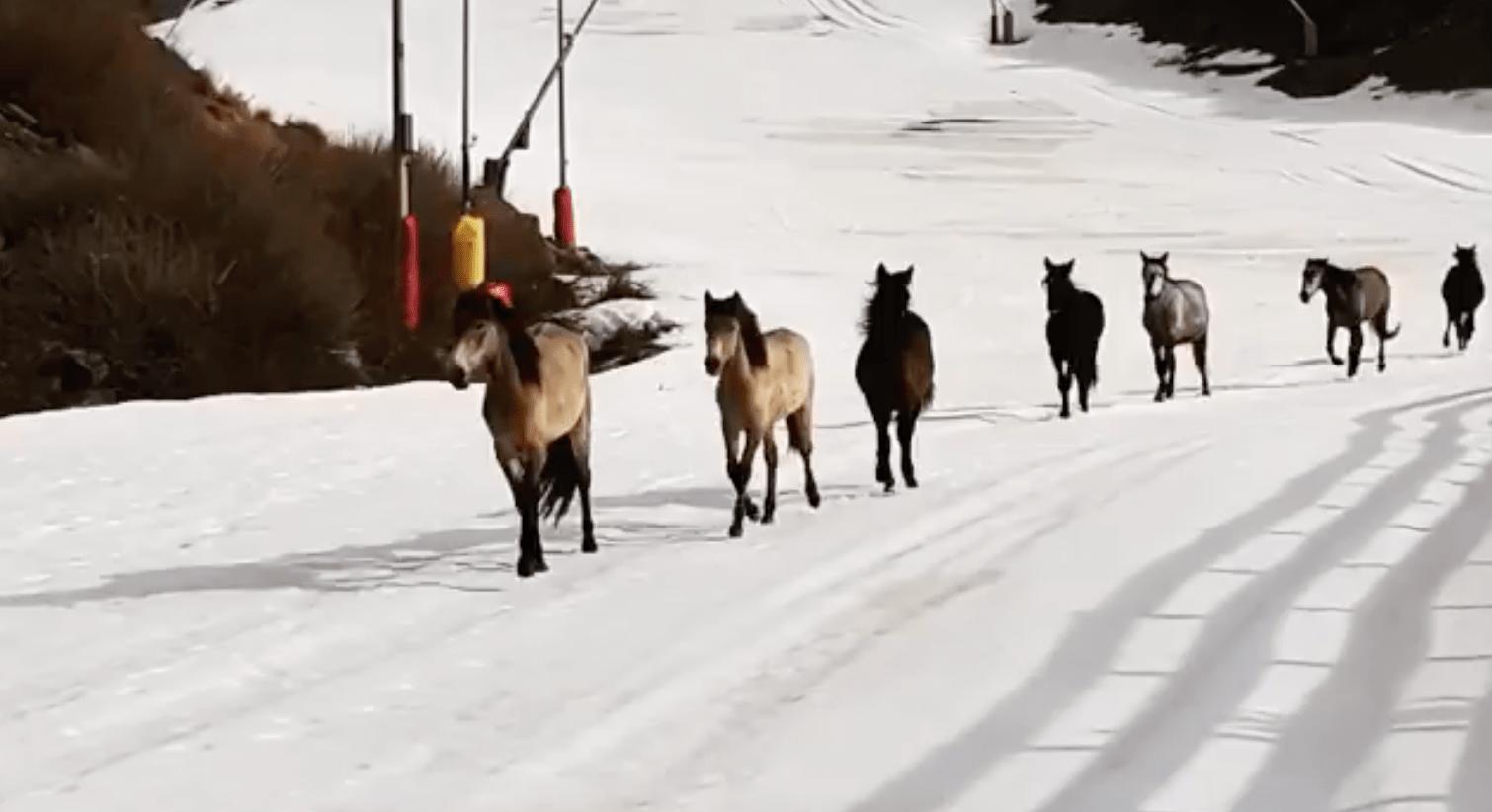 wild horses, spain,