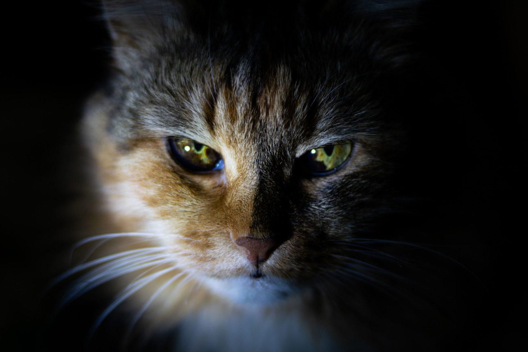 cat, cats