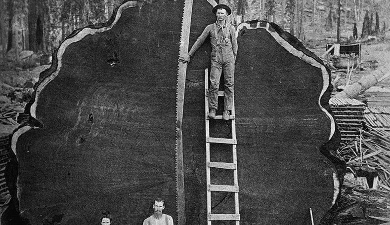 Old time loggers