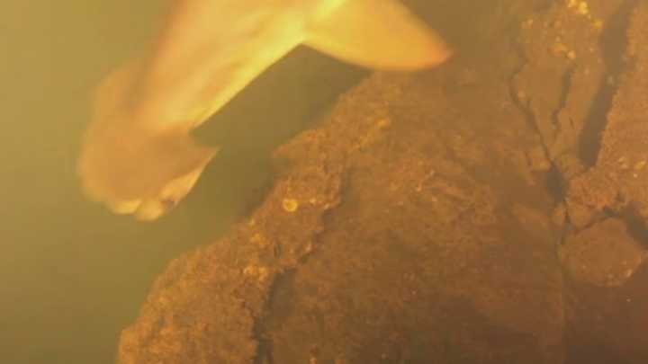 hammerhead shark spotted in volcano
