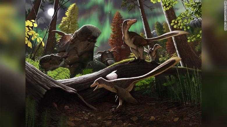 Raptor found in Arctic