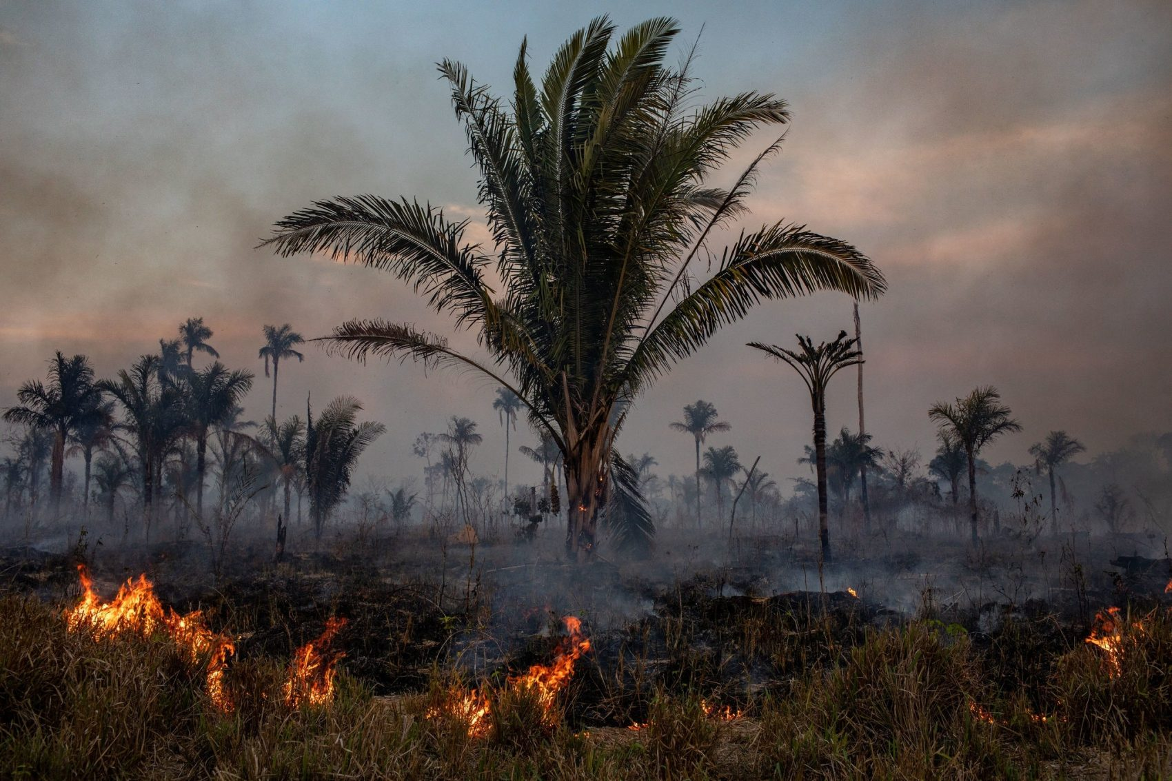 Outbreaks, Fires, Amazon, Lugs of the World