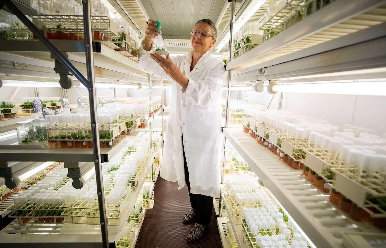 Sciences, Austrian, Russian, Siberia, Plant, Scientists, Arctic