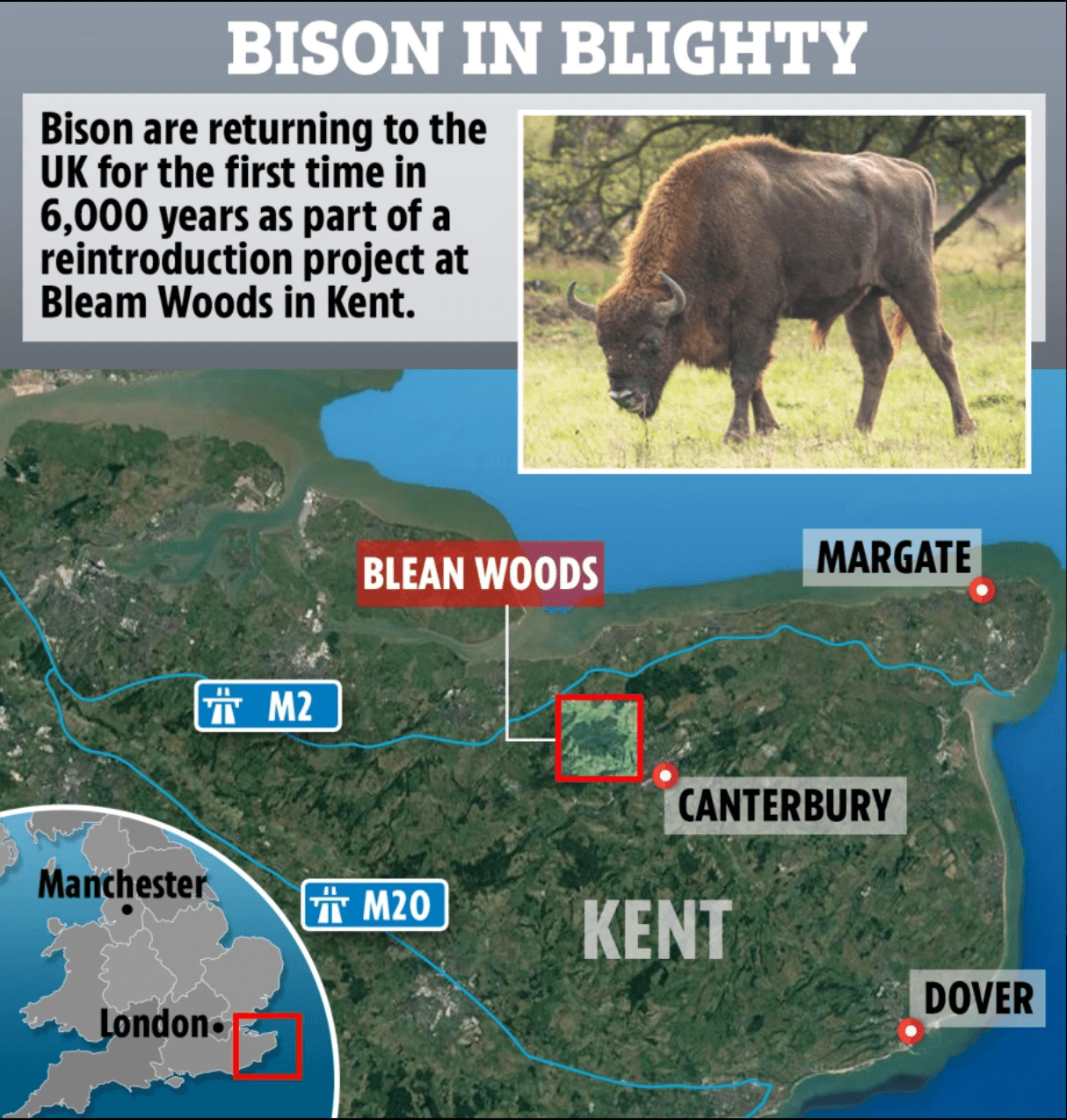 News, Bison are returning, Blean woods, Canterbury
