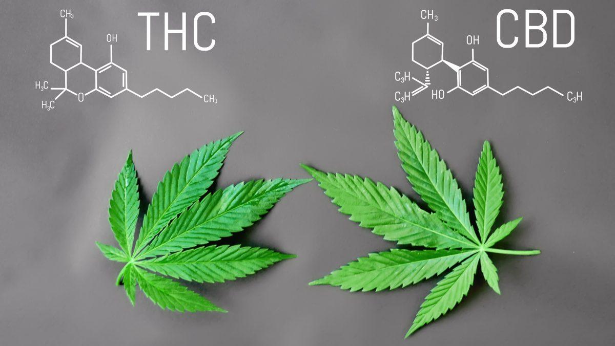 THC, CBD, Cannabis