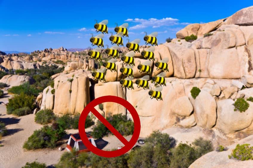 bees, Joshua Tree national park, jumbo rocks, california