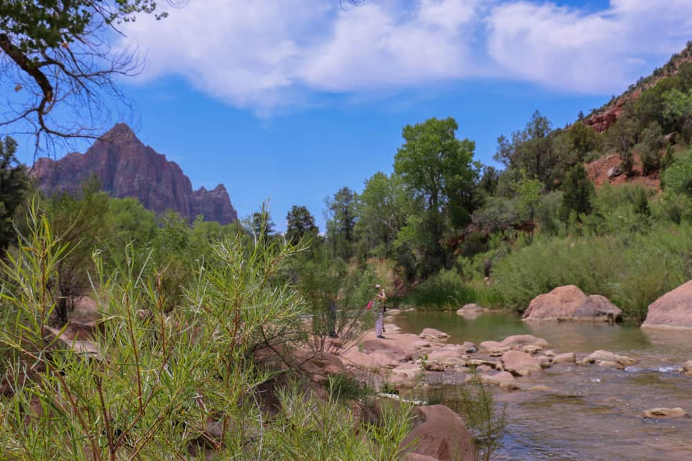 virgin river, Zion national park, Utah, algae, toxic, dog died