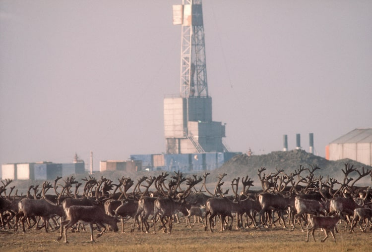 Oil and Gas plans in the Arctic