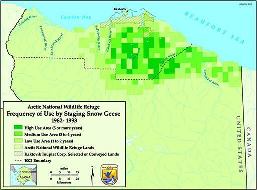 Snowgeese vs oil plans