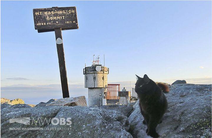 cat, died, Mount Washington observatory,