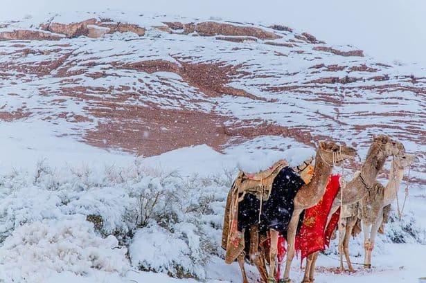sahara, snow, Africa, desert