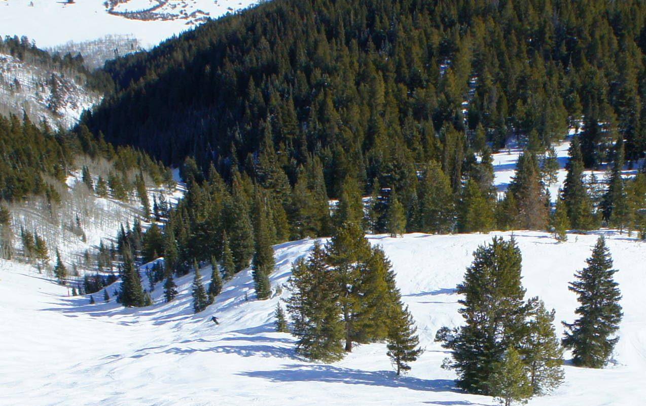 aspen mountain, Walsh's run, colorado