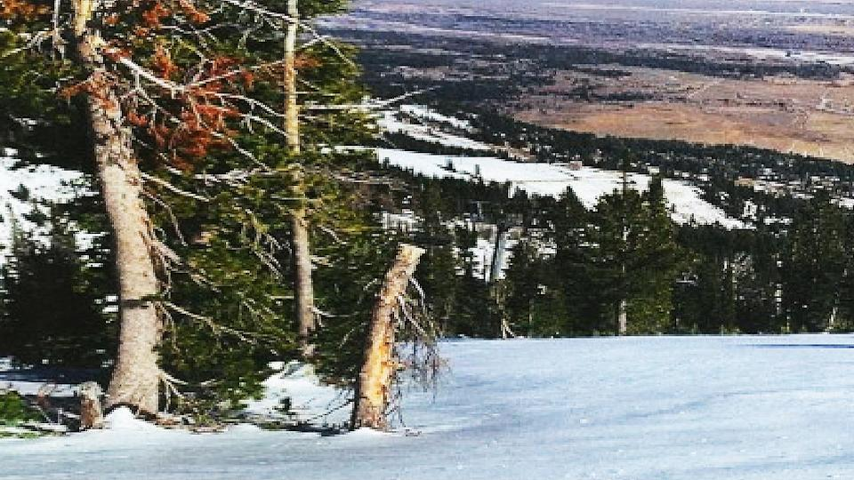 tree stump, Jackson Hole, Wyoming,