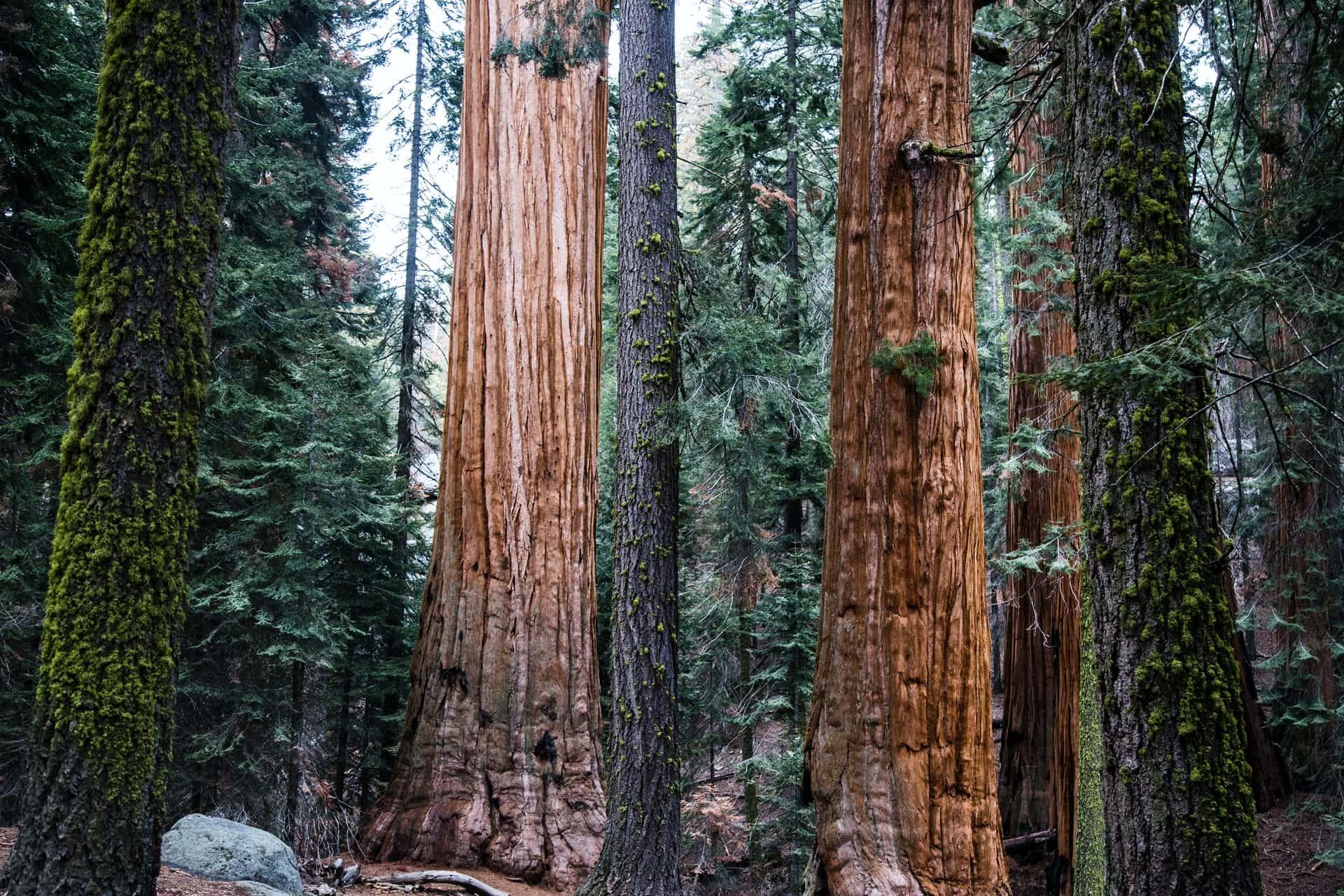 sequoia national park, california,