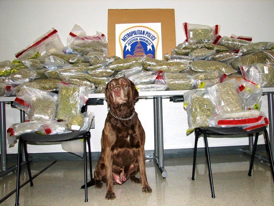 weed dog, marijuana,