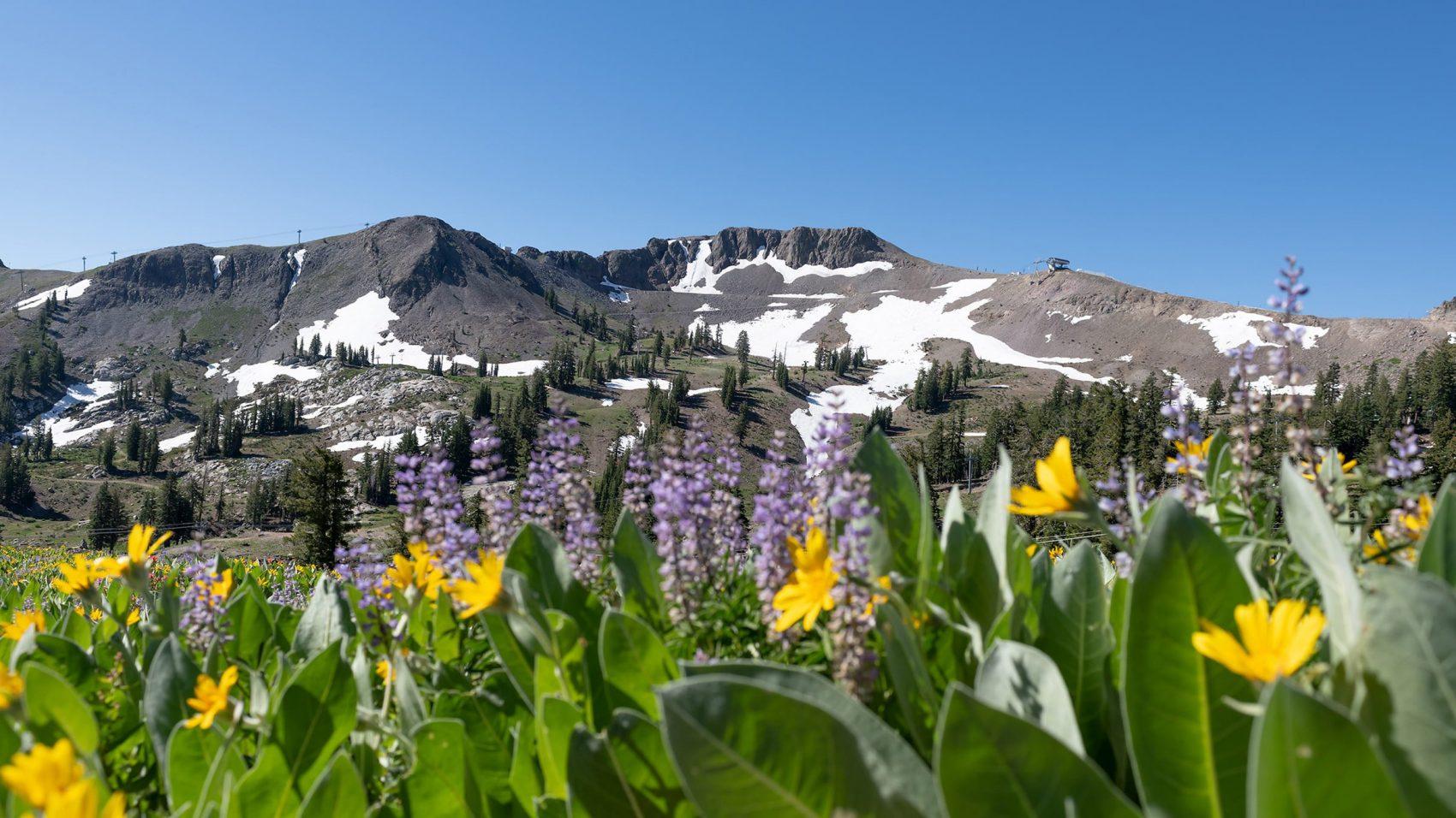 Squaw Valley alpine meadows, Washoe trie, cultural tour, california,