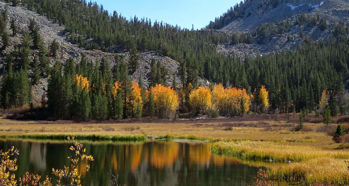 grass lake, Inyo national forest, California