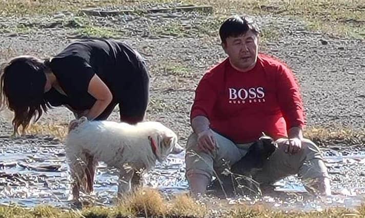 thermal waters, washing dogs, Yellowstone,