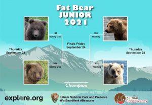 bear tournament