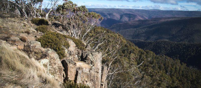Australian woodland