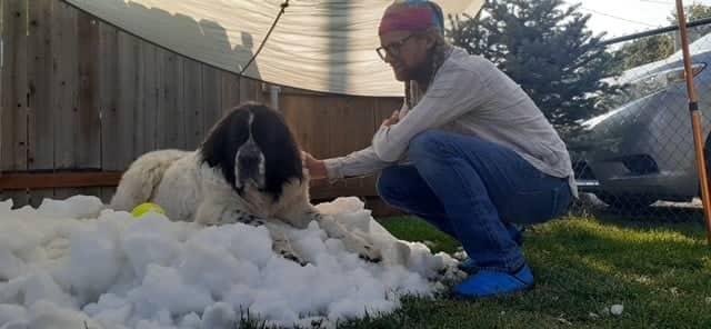 Maggie, snow, dog,