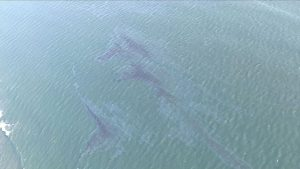 oil spill, Pacific Ocean, california,